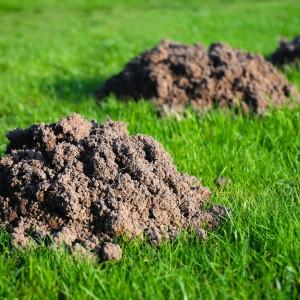 moles-molehills